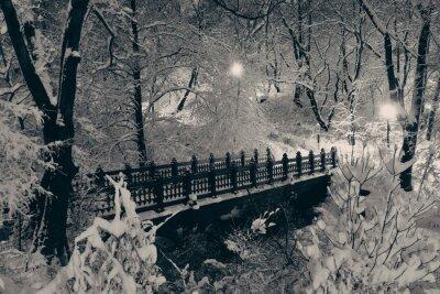 Obraz Central Park zimą
