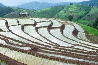 Chiang Mai Rice Terraces
