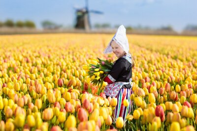 Obraz Child in tulip flower field. Windmill in Holland.