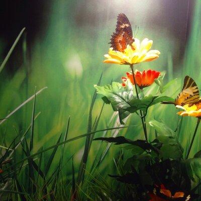Obraz Çiçek ve Kelebek