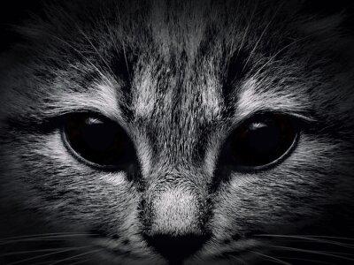 Obraz Ciemna kufa kot bliska. przedni widok
