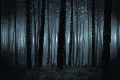 Obraz Ciemny mglisty las