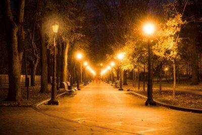 Obraz City park alley, bench, trees and lanterns. Night city park landscape