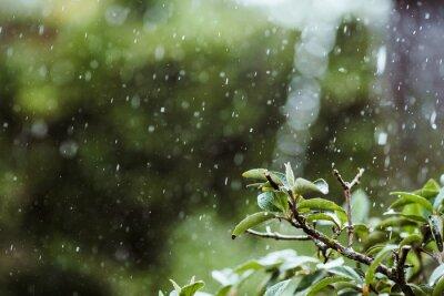 Obraz Close-up Of Wet Plant During Rainy Season