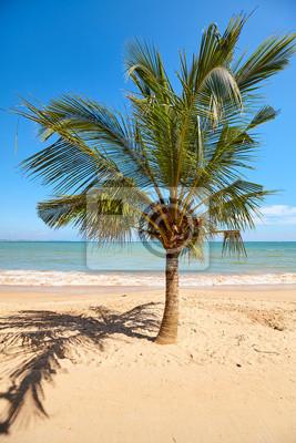 Coconut palm tree on a tropical beach, Sri Lanka.