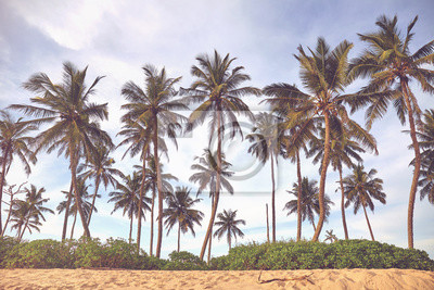 Coconut palm trees at a beach, color toning applied, Sri Lanka.