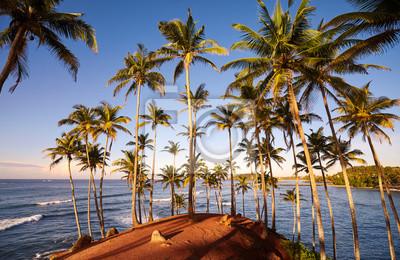Coconut palm trees on a tropical island at sunrise, Sri Lanka.