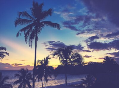 Coconut palm trees silhouettes at dusk, color toned picture.