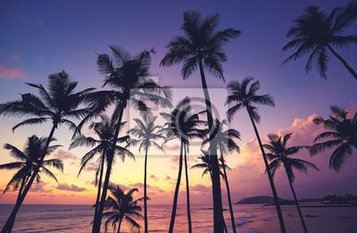 Coconut palm trees silhouettes at purple sunset, Sri Lanka.