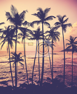 Coconut palm trees silhouettes at sunset, color toning applied, Sri Lanka.