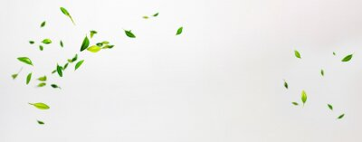 Obraz Collection of random green leaves falling in the air isolated on white background
