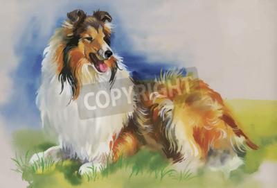 Obraz Collie pies Zwierząt Akwarele ilustracji wektorowych.