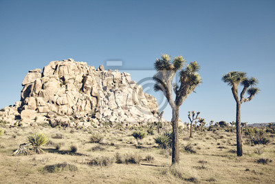 Color toned picture of Joshua Tree National Park scenery, California, USA.