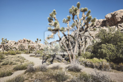 Color toned picture of the Joshua Tree National Park landscape, California, America.