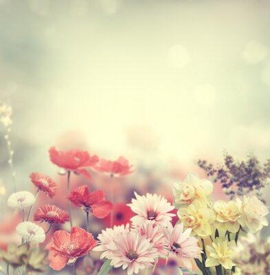 Obraz Colorful Flowers