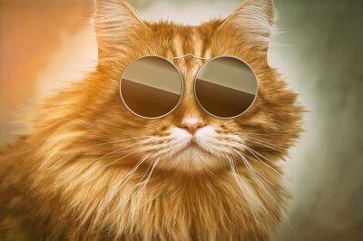 Obraz Cool Cat