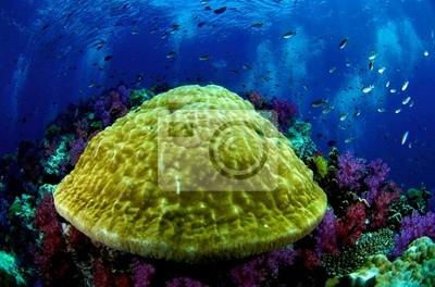 Coral Reef, Park Narodowy Similan, Tajlandia