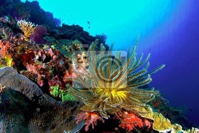 Coral Reef, Similan National Park, Tajlandia