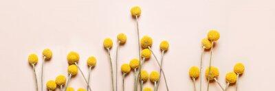 Obraz Craspedia globosa dry flowers