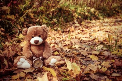 Obraz Cute brown teddy bear toy with vintage alarm clock sits on dry orange leaves pile in autumn park on nice sunny day close view