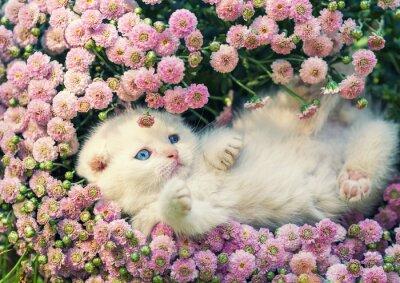 Obraz Cute kitten relaks w kwiaty