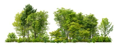 Obraz Cutout tree line. Forest and green foliage in summer. Row of trees and shrubs isolated on white background. Forest scape.
