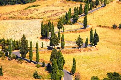 Obraz Cyprys scenicznego drogowego w Monticchiello pobliżu Siena, Toskania, I