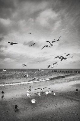 Czarno-biały obraz ptaków na plaży.