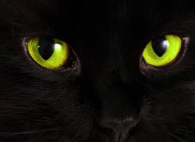 Obraz Czarny kot patrzy na ciebie z jasnymi zielonymi oczami