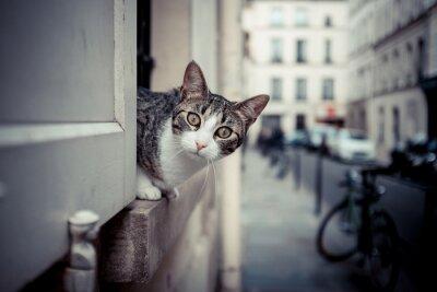 Obraz czat curieux fenêtre ville