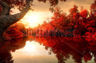 Obraz Czerwoni liście na drzewach wzdłuż rzeki w jesieni