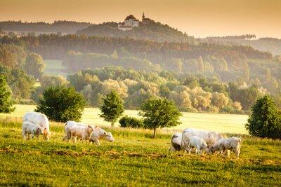 Obraz Czeski świt krajobraz