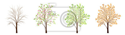 Obraz Cztery pory roku drzewa wektor