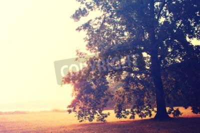 Obraz Dąb jesienią