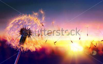 Obraz Dandelion To Sunset - Swoboda życzenia