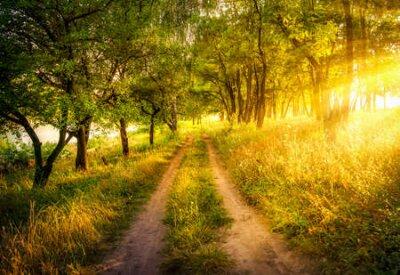 Obraz Dawn on the road