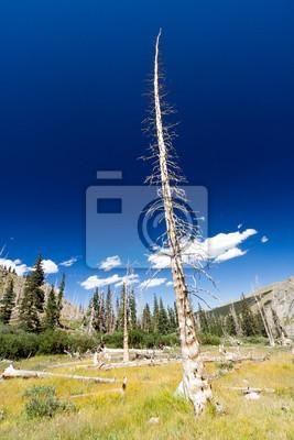 Dead Tree Od pożaru lasu