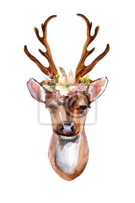 Deer - Widok z przodu