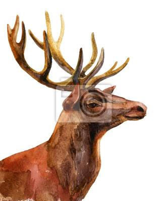 Deer - Zobacz profil