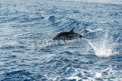 Obraz Delfin skoków poza morze