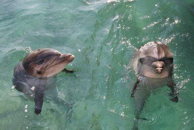 Obraz delfiny