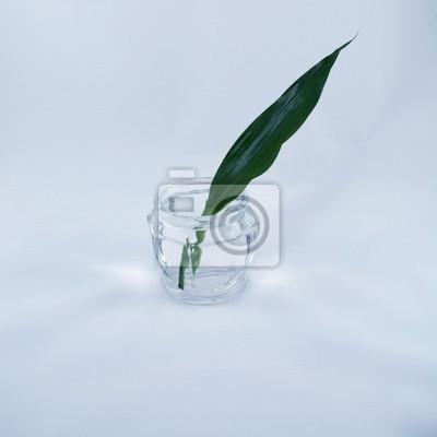 Długi zielony liść w słoiku