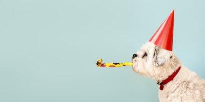 Obraz Dog celebrating with party hat