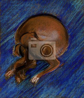 Dog on a dark blue carpet