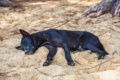 Dog on a tropical beach