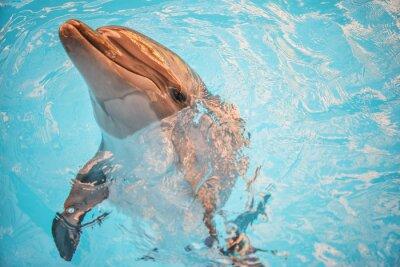 Obraz Dolphin w dorzeczu oceanarium