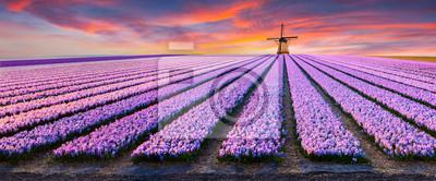 Obraz Dramatyczna scena wiosna w gospodarstwie kwiatów.