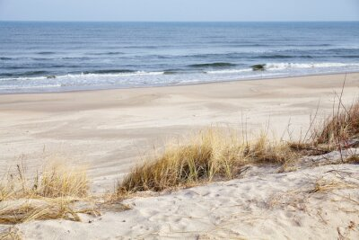 Dried grass on a beach dune, selective focus.