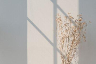 Obraz Dried gypsophila with window shadow on a beige wall