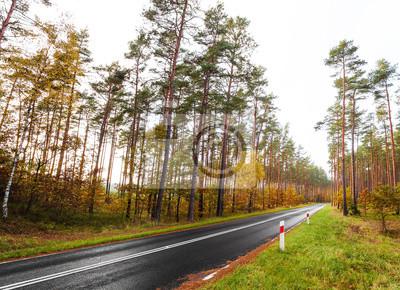 Droga przez kolorowe lesie jesienią.